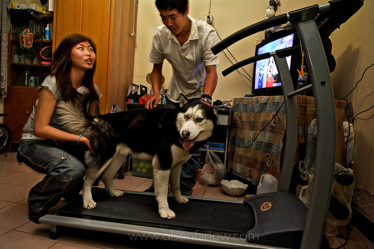China's One Dog Policy | Beijing, China