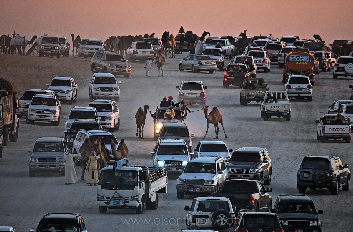 Camel Beauty Contest | Empty Quarter, Abu Dhabi