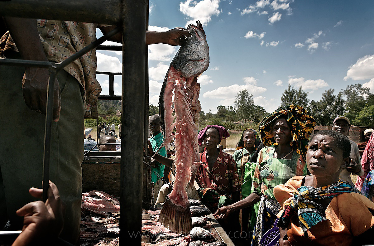 Europe Gets Protein, Africans Get Rotting Fish Bones | Lake Victoria