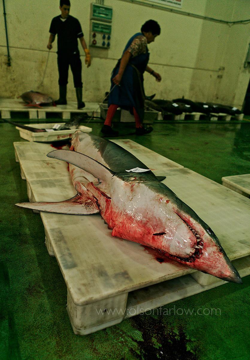 Shark in Vigo, Spain Fish Market
