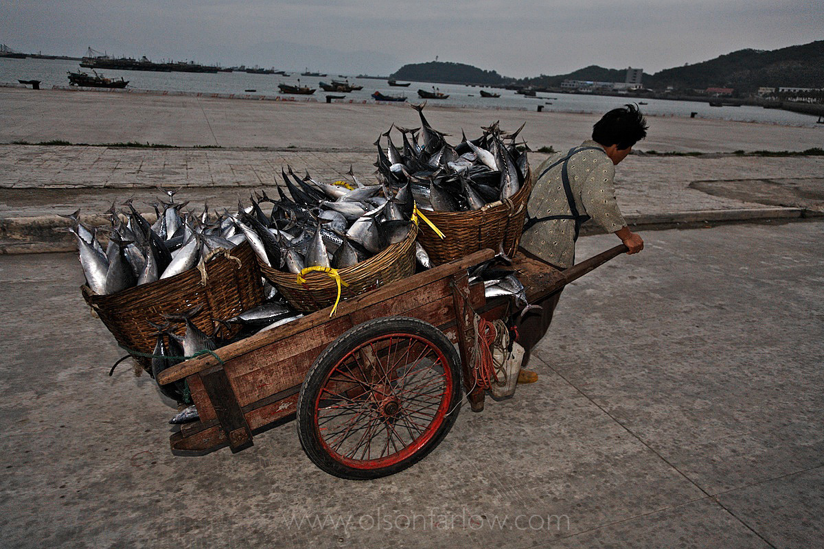 Fisherwoman with cart full of tuna just off the boats in Zhapo, China