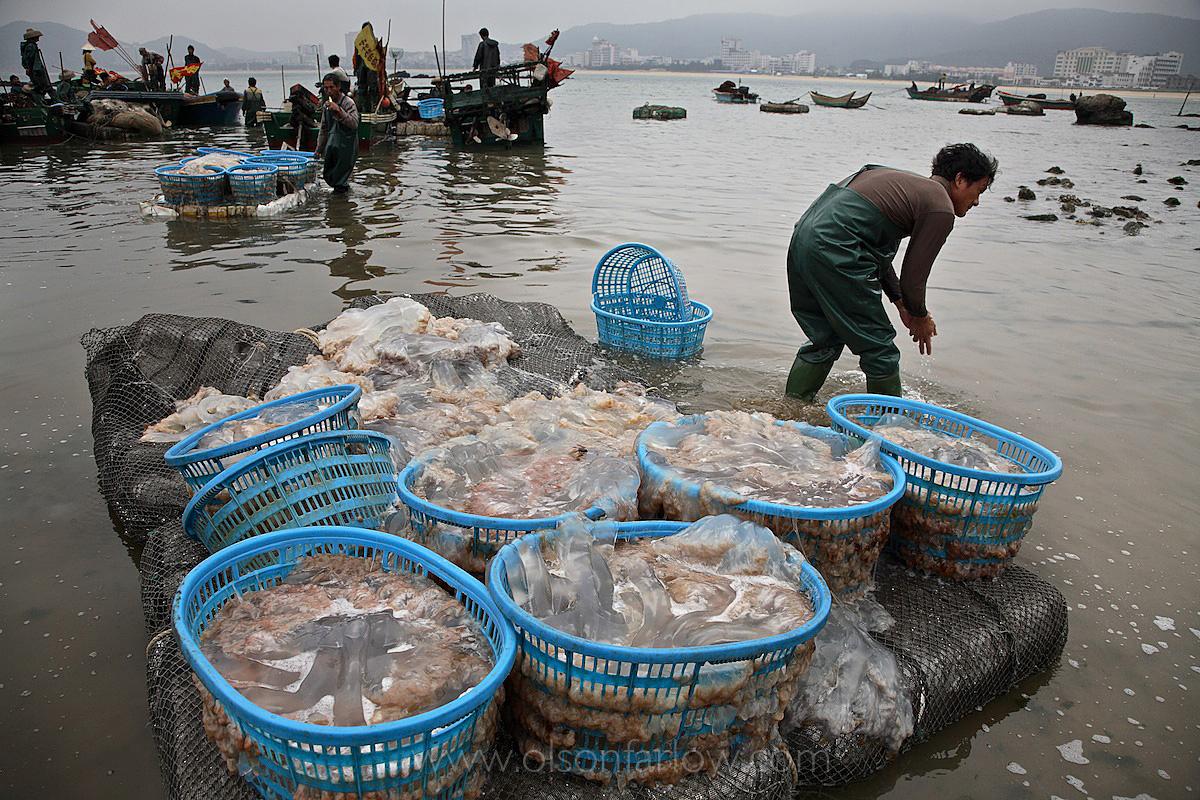 Zhapo China's Jellyfish Fishery