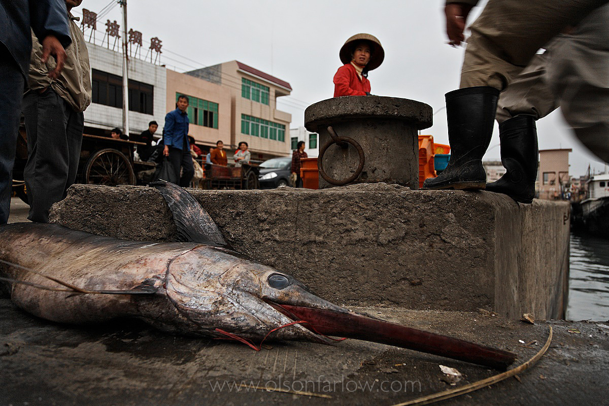 Swordfish tossed aside in a market in the town of Zhapo China