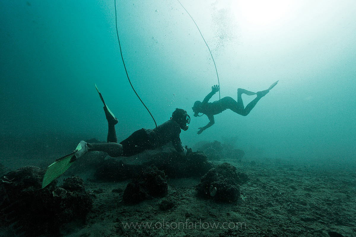Live Reef Fish Divers | Indonesia