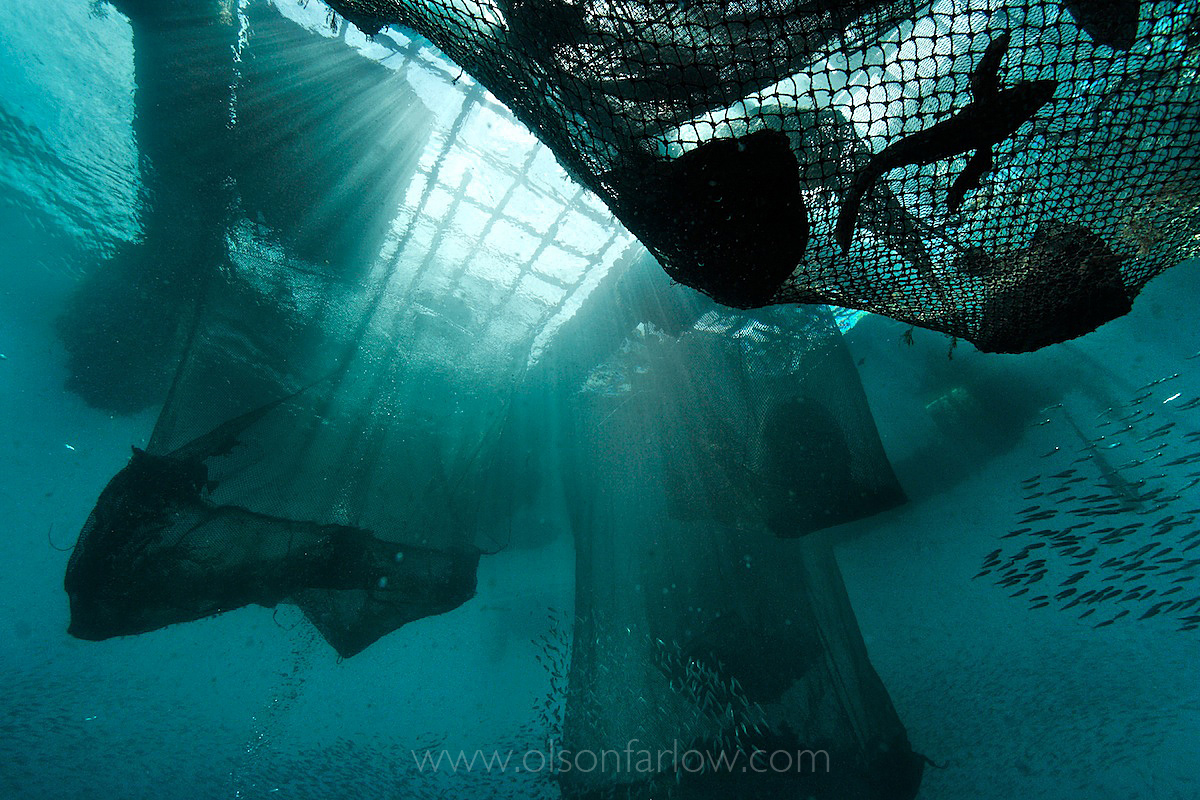 Holding Cages for LIve Reef Fish Trade – Destined for China