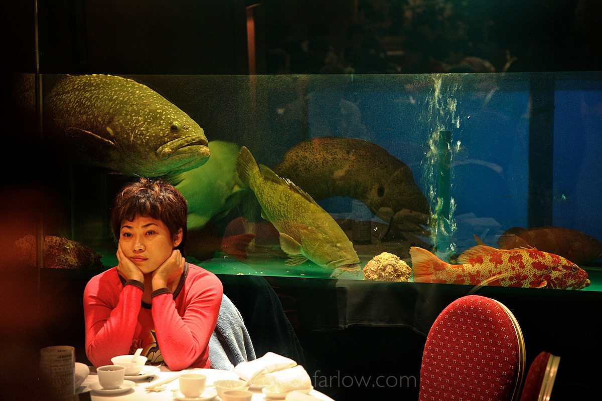 Aquarium With Live Reef Fish in Chinese Restaurant