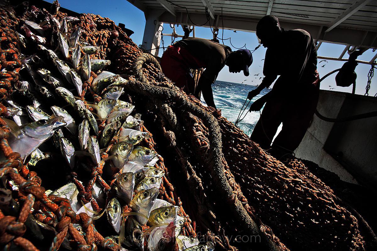 Fish Clog Nets on EU Factory Trawler | Senegal