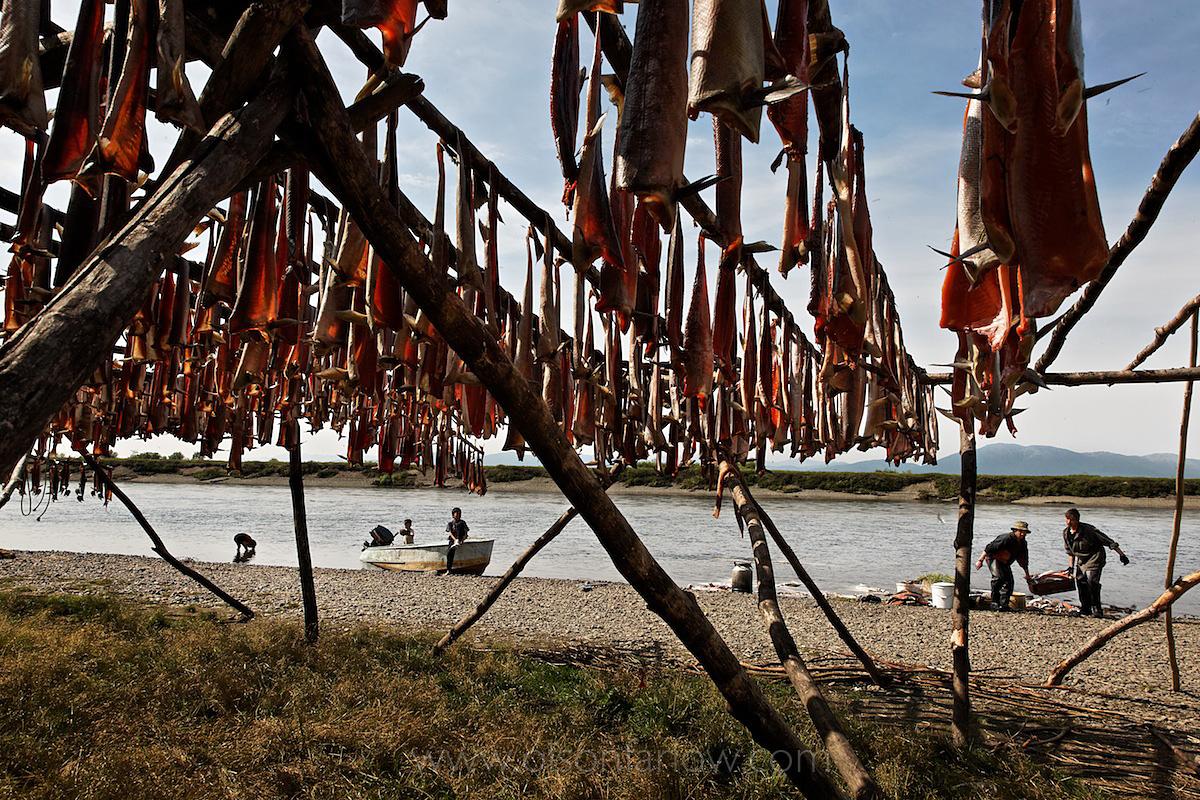 Koryaks Dry Fish
