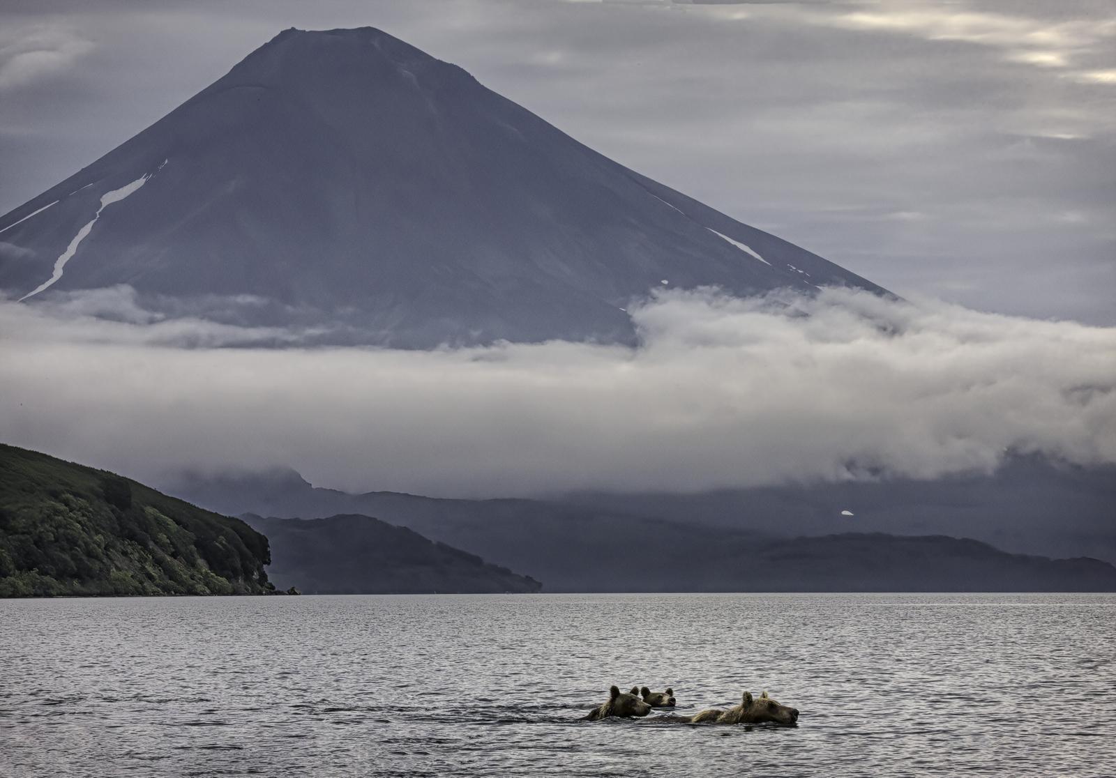 Russian Brown Bears in Kamchatka