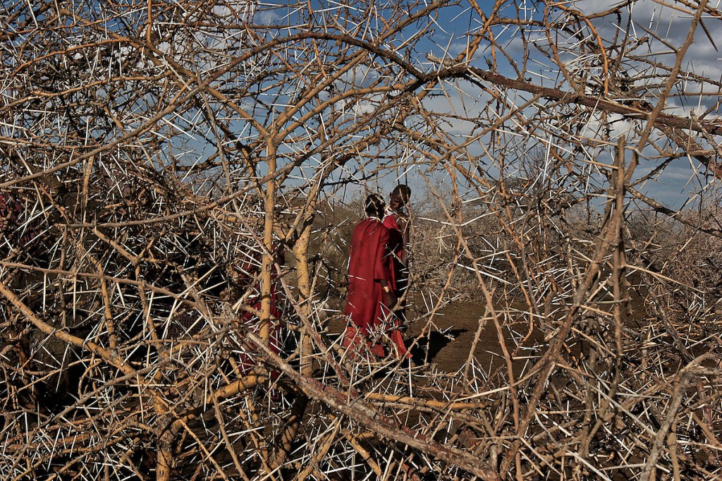 Maasai, Lost in the Stampede, National Geographic 4