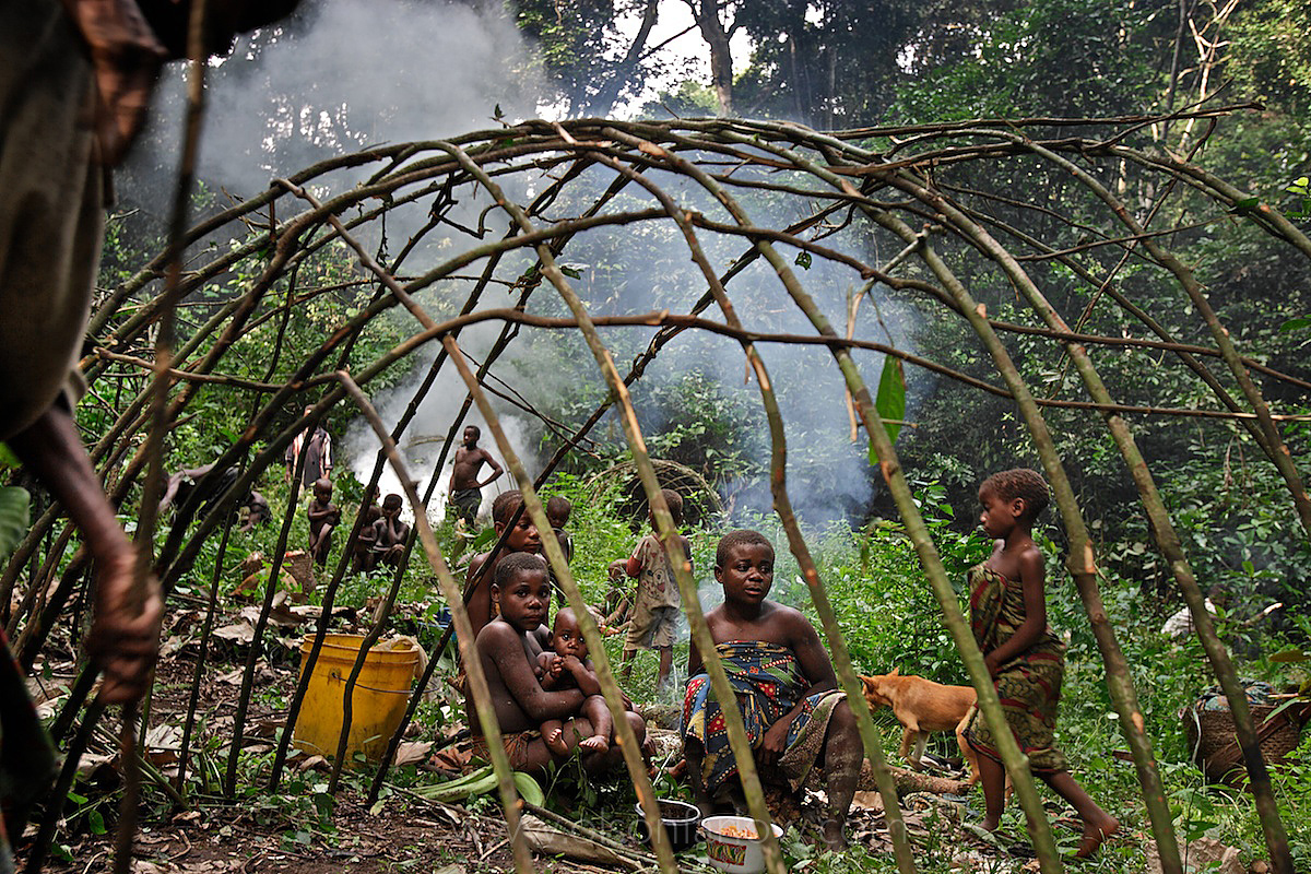 Pygmies Build Hunting Camp Deep in the Ituri Forest | DR Congo