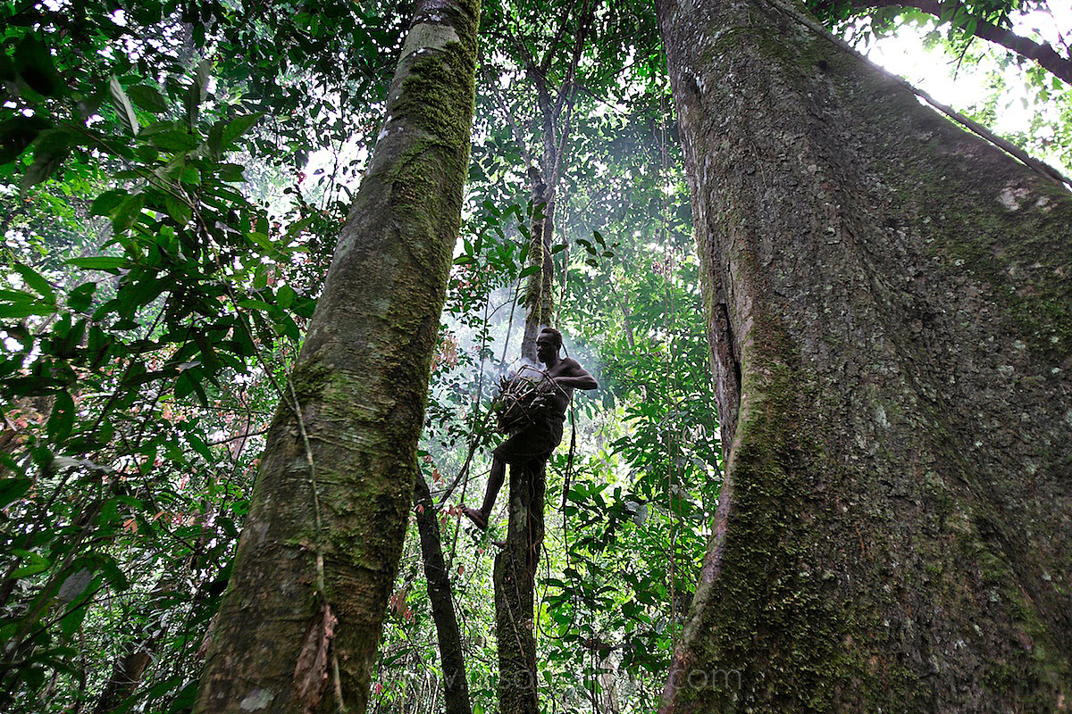 Pygmy Hunting Involves Using Forest Materials | Ituri Forest, DR Congo