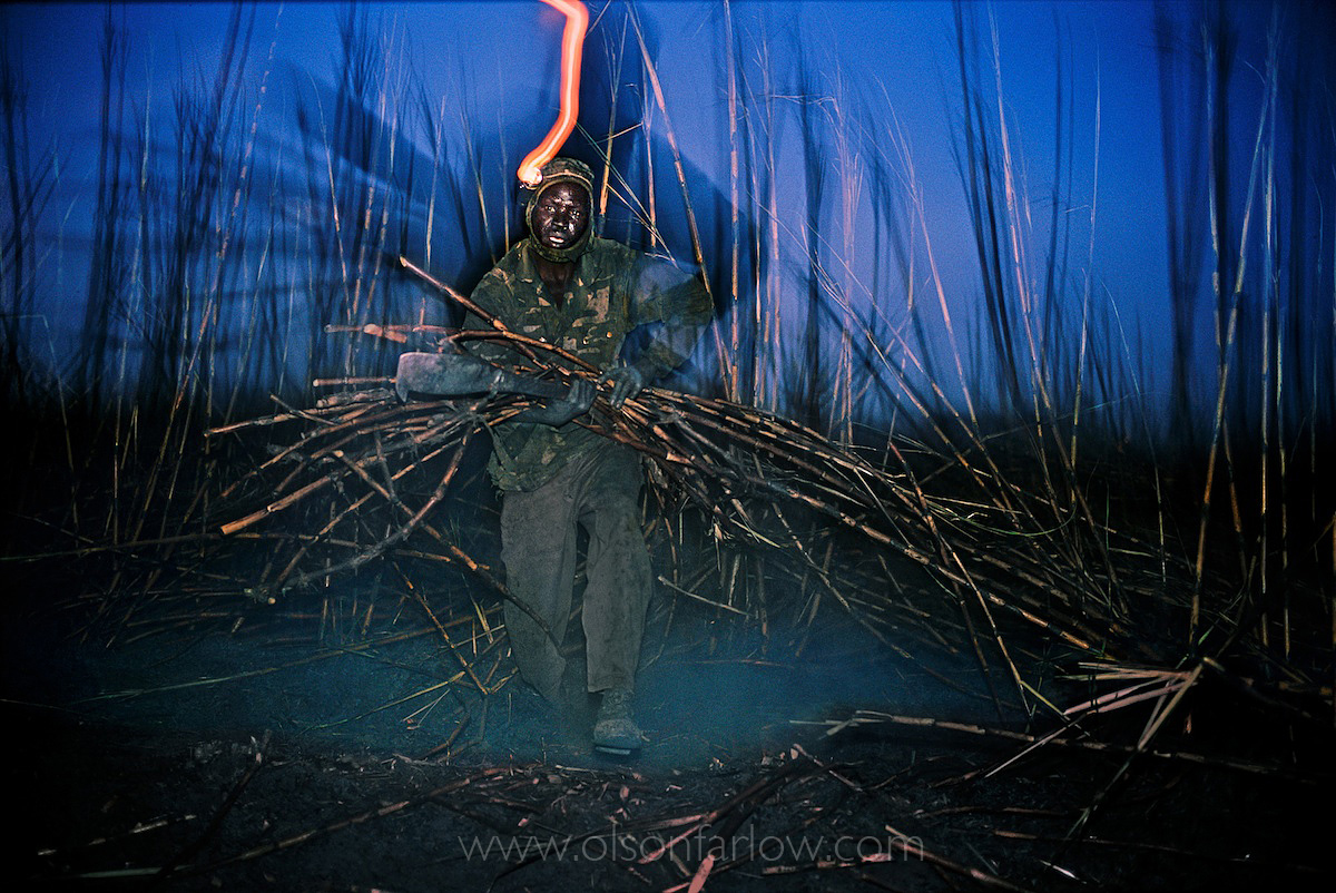 Sugar Cane Migrant Worker War Refugee | Northern Sudan