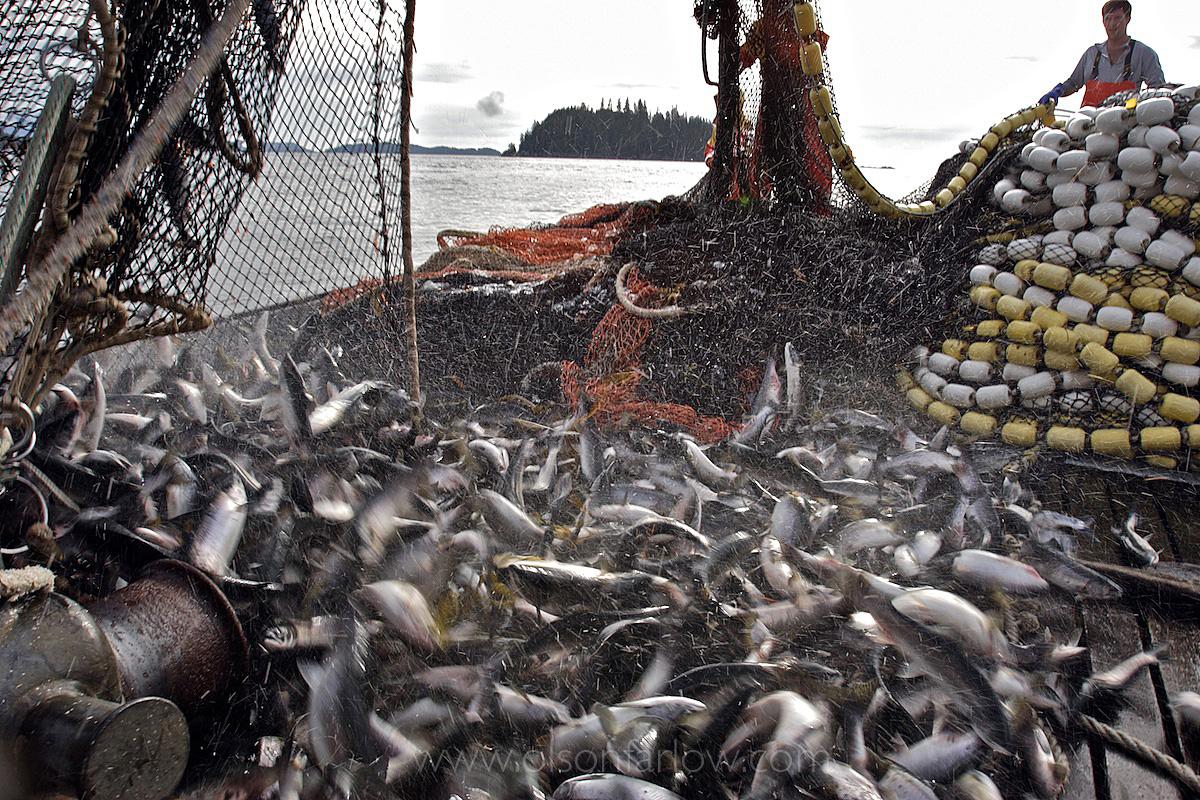 Salmon Fishing In Southeast Alaska