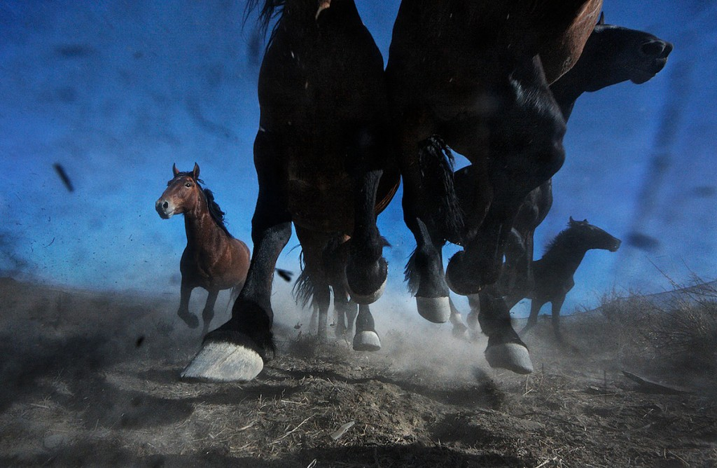 Wild horse hooves run over remote camera in the American West