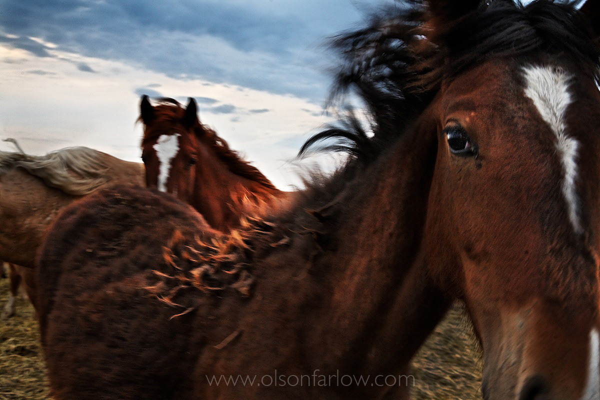 Curious, Wind-Blown, Yearling Mustang