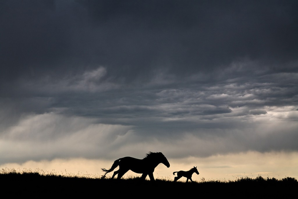 A silhouette of a mare and foal running from the looming dark gray clouds of a thunderstorm.