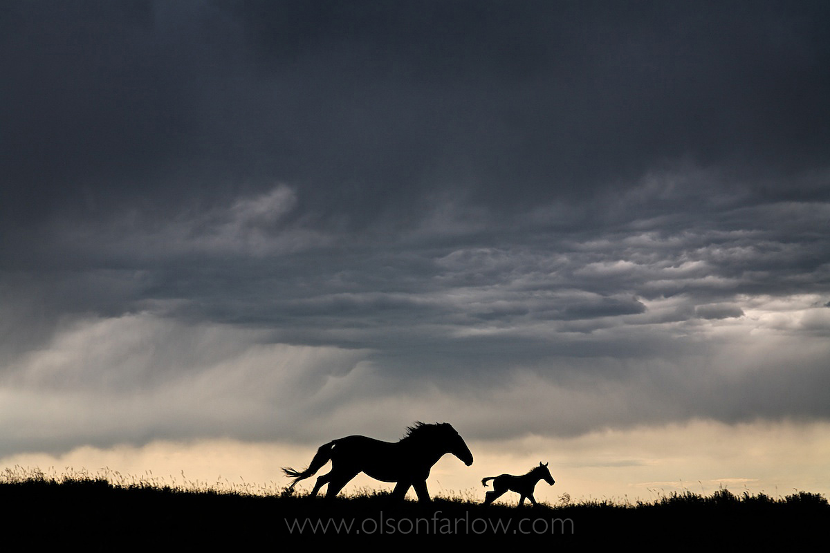 Mustang Mare And Foal Race Against The Storm
