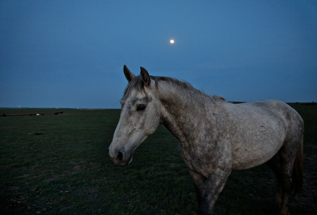 Portrait of gray horse with ears pointed forward at night.