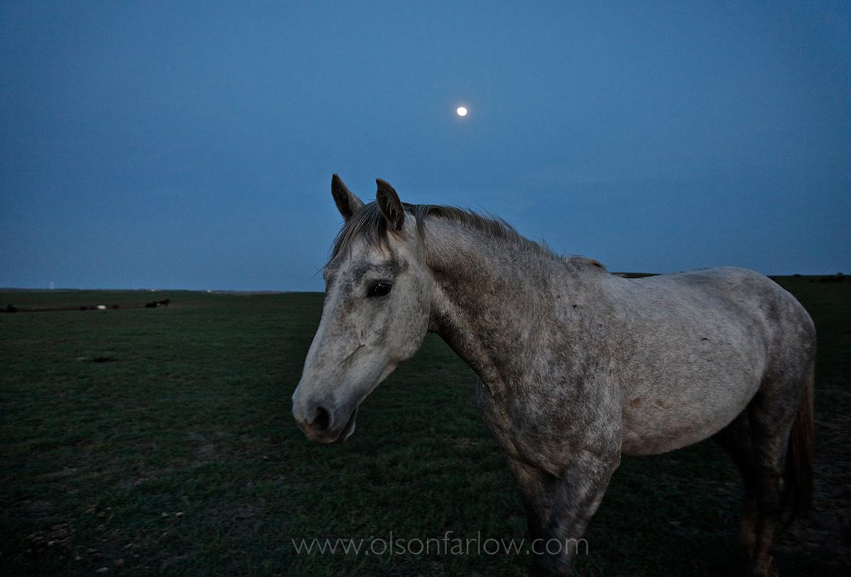 White Horse Under Full Moon In Blue Night Sky