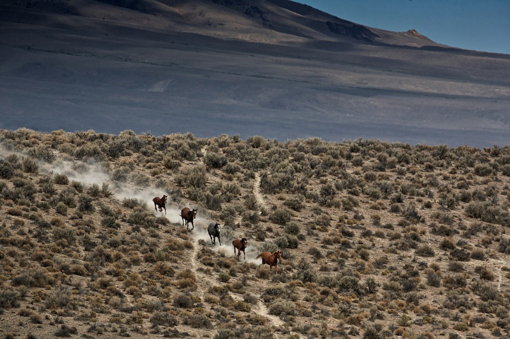 Five horses follow a dusty trail galloping across sagebrush and dirt.