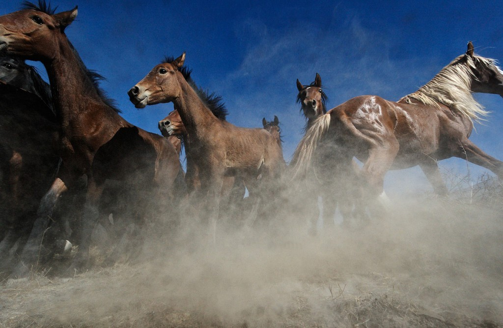 Remote camera captures started horses that are panicked.