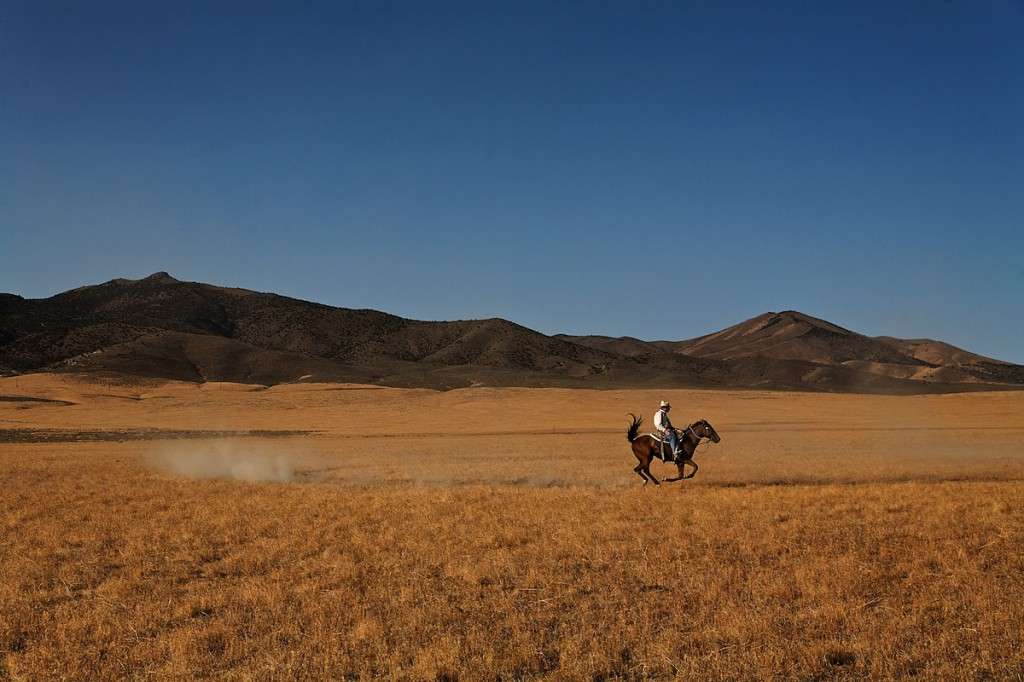 One horse and rider kick up dust in dry grasslands in American West.