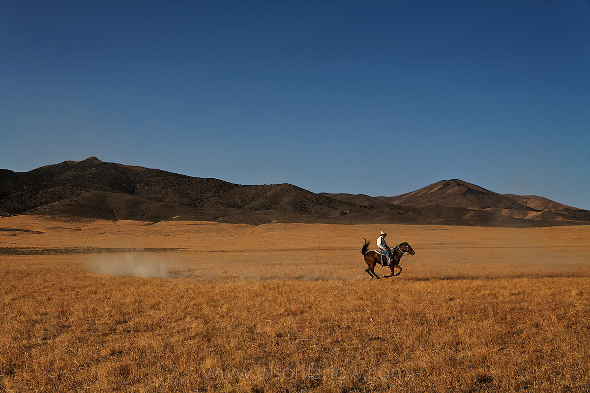 Horse Trainer Rides In Nevada Desert Landscape