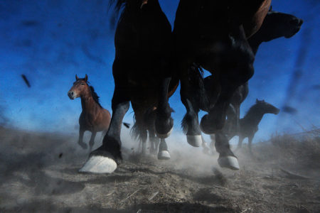 Mustangs | Spirit of the Shrinking West, National Geographic Magazine