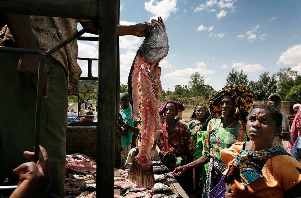 Global Fish Crisis | Still Waters, National Geographic Magazine